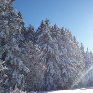 Winterliches Simonswald