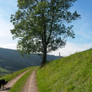 Nordic-Walking Strecke